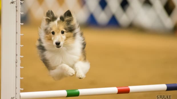 five-odd-things-the-olympics-have-taught-me-about-dog-sport