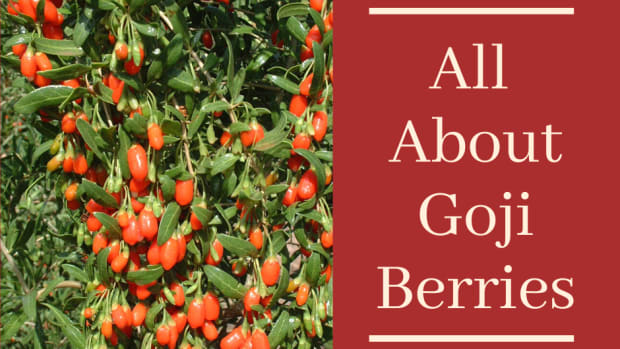 goji-berries-a-versatile-super-food