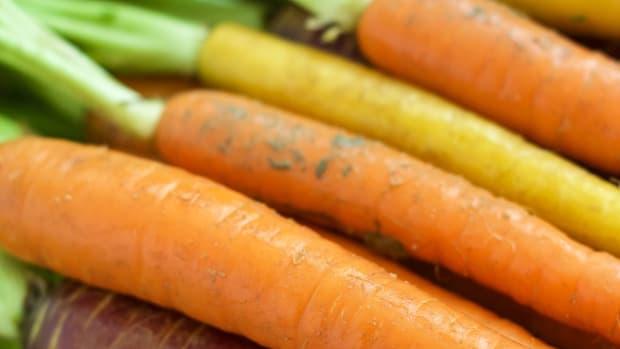 exploring-carrots