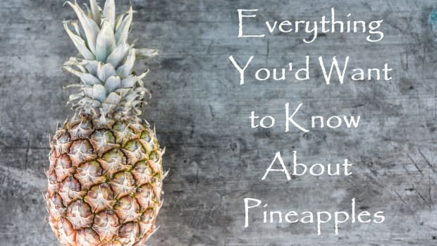 exploring-pineapple