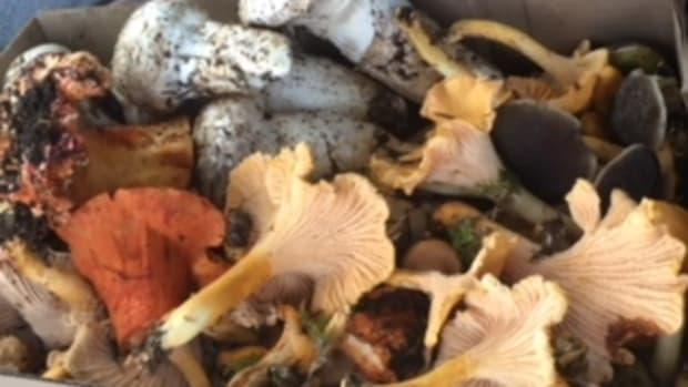 wild-mushroom-foraging