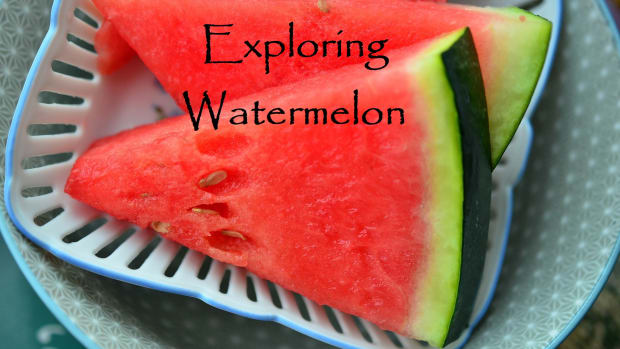 exploring-watermelon