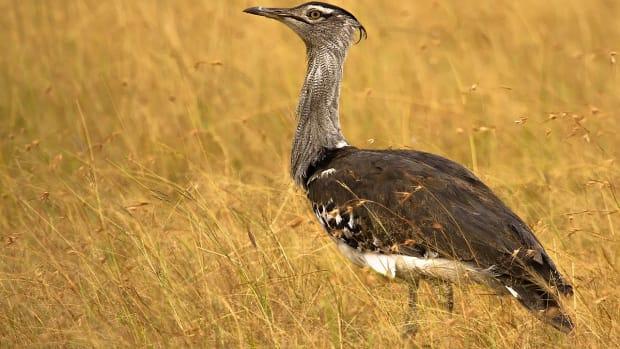 animals-youve-never-heard-of-10-birds