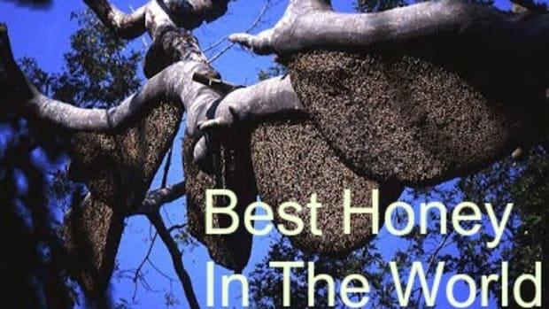 health-benefits-of-raw-unprocessed-honey