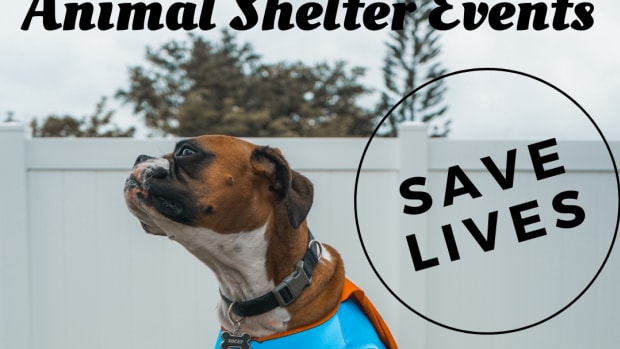 shelter-begins-new-year-with-high-hopes-for-increased-community-support