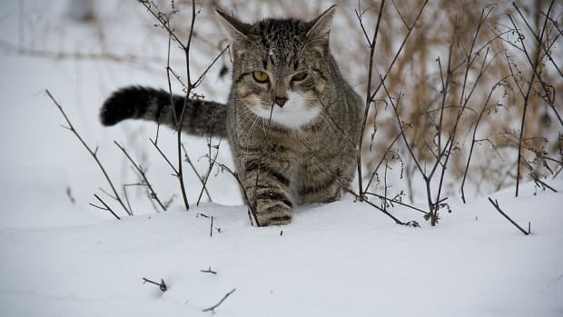 stray-animals-should-you-help-or-ignore
