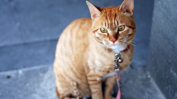 can-pets-be-left-to-fend-for-themselves