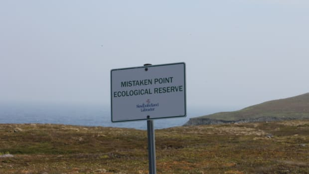 mistaken-point-ecological-reserve-the-oldest-creatures-on-earth-preserved-on-canadas-east-coast