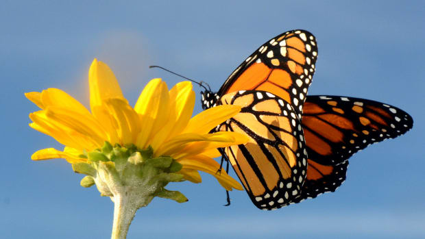 butterfly-clouds-and-spring-fever