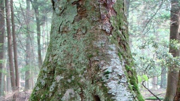 appalachian-fairy-encounter