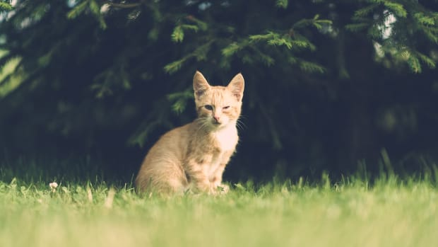 your-cat-has-fleas-here-are-7-ways-to-get-rid-of-them
