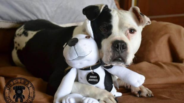 things-i-learned-from-the-stereotypes-surrounding-pit-bulls