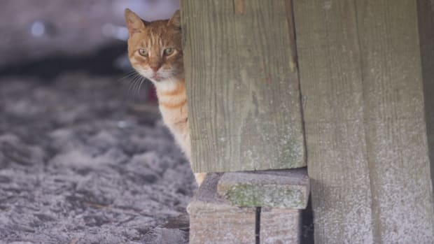 the-beloved-boardwalk-cats-of-atlantic-city