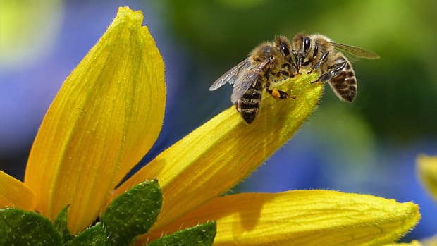 save-our-bees-and-save-our-planet