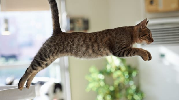 cats-and-gravity