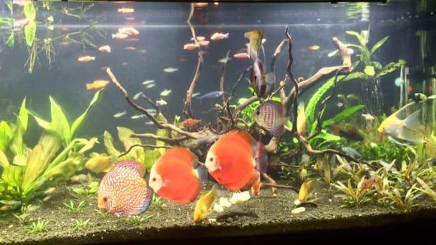 aquarium-tips-for-beginners