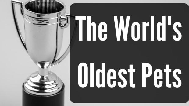 worlds-oldest-pets