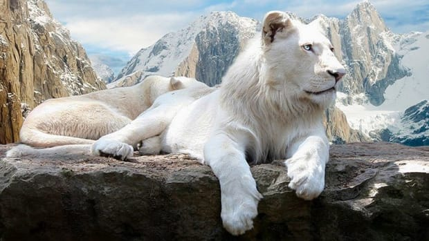 stunning-albino-animals