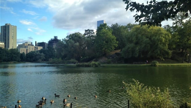 14-relaxing-things-to-do-in-central-park