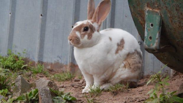free-range-meat-rabbits