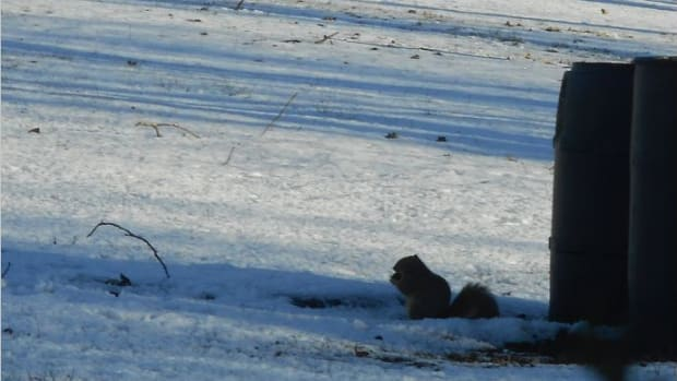 minnesota-musing-squirrels-theyre-jerks-and-they-are-going-to-be-jerky