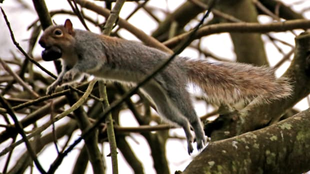 ode-to-a-squirrel