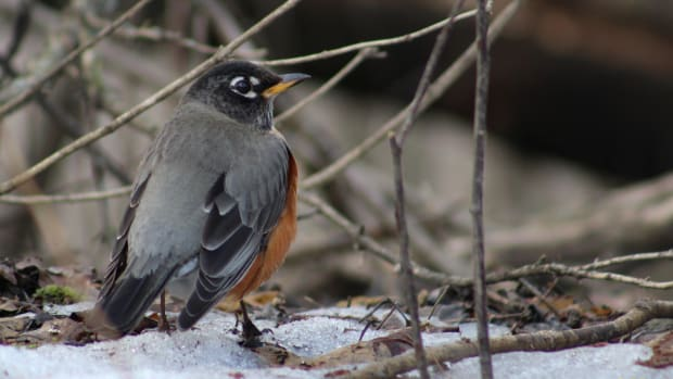 winter-birds-in-kingston-ontario-a-photo-essay