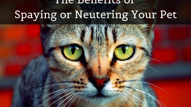 spay-and-neuter-saves-lives