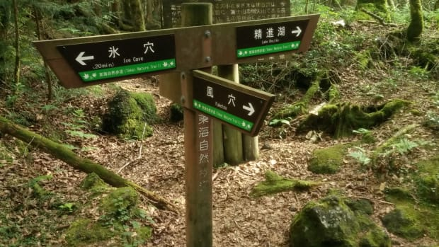 what-is-japans-suicide-forest-really-like