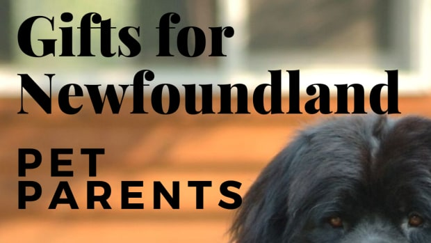 12-terrific-gifts-for-newfoundland-dog-lovers