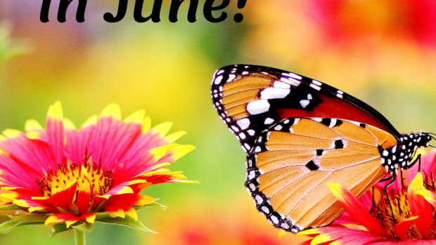 crazy-silly-holidays-in-june-that-youll-have-fun-celebrating