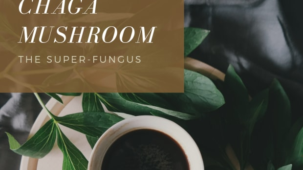 the-health-benefits-of-chaga-mushroom-superfood-elixirs
