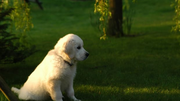 ten-ideas-for-spending-quality-time-with-your-dog