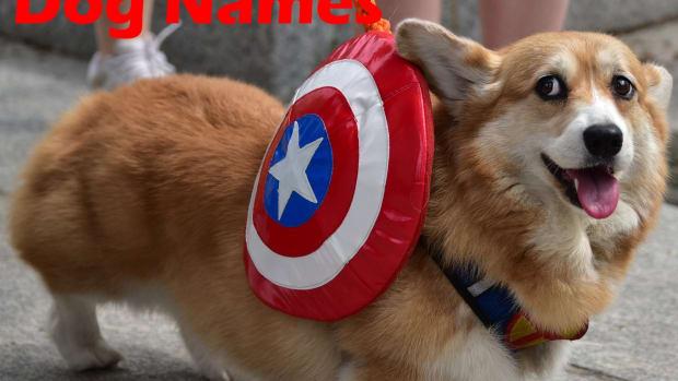 marvel-dog-names