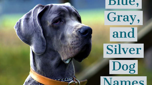 dog-names-for-gray-dogs