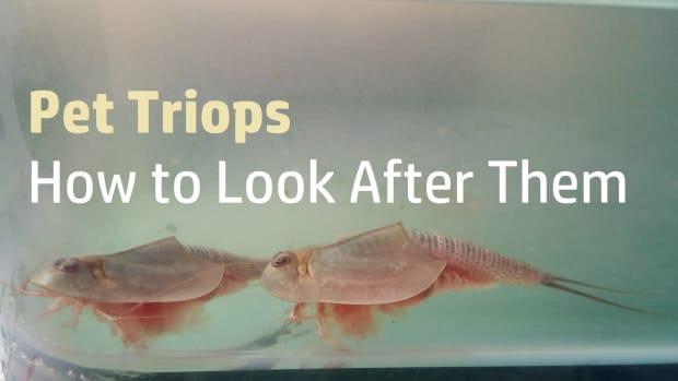 triops-care