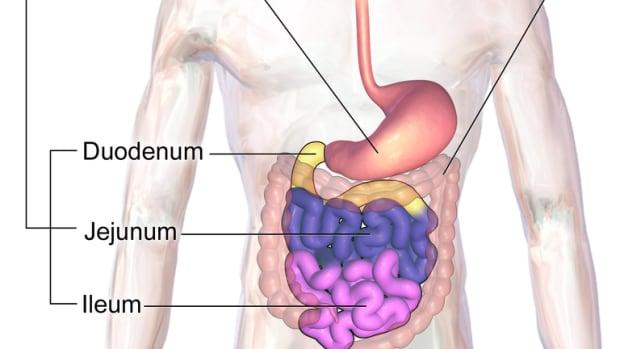 giardia-in-the-intestine-an-interesting-parasite