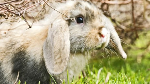 tips-for-choosing-a-name-for-your-pet-rabbit