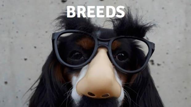 breeds-in-mutt