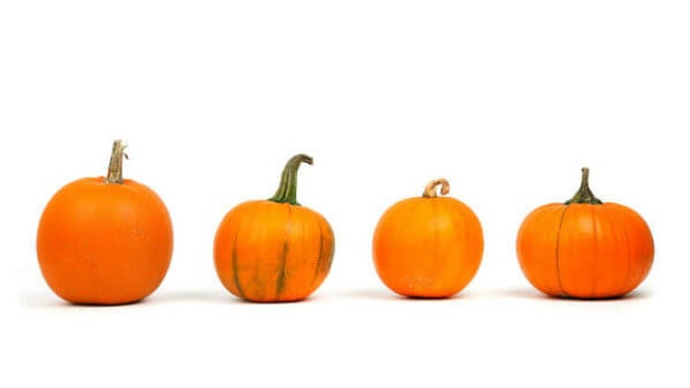 reasons-to-eat-pumpkin-no-matter-the-season