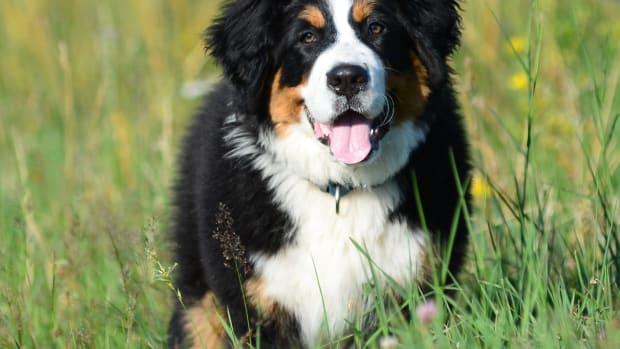 dog-long-life