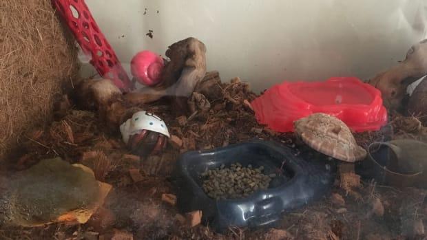 hermit-crab-care-basics