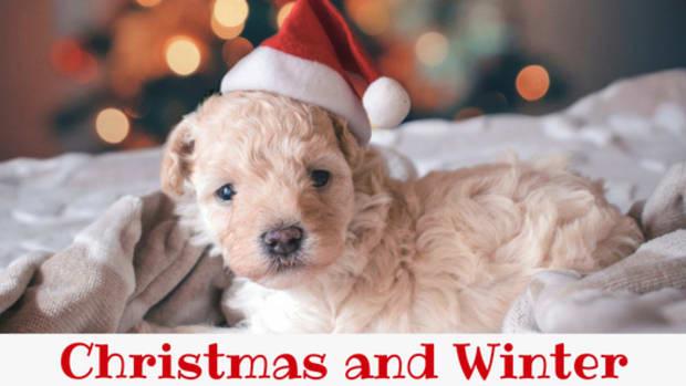 winter-and-christmas-dog-names