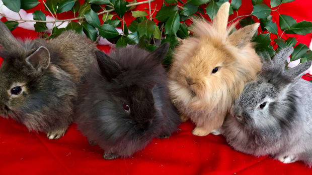 rabbits-are-awesome-pets-year-round-not-just-for-easter