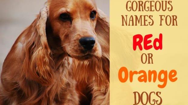 red-dog-names-orange-dog-names