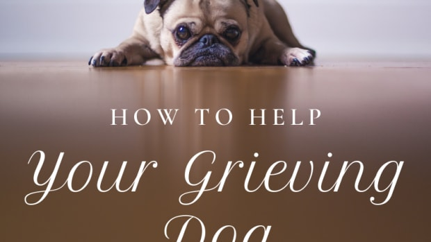 ways-to-help-a-grieving-dog