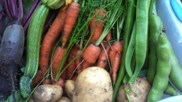 vegan-sources-of-essential-vitamins