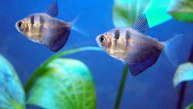 tropical-fish-for-beginners