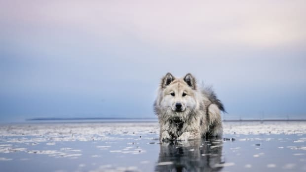 tips-to-keep-your-dog-safe-at-the-beach