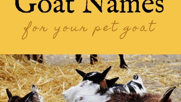 goat-names